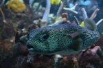 egzotyczna ryba
